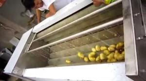 Máy rửa rau củ quả ZK – QX